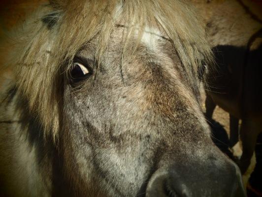 Princess - The pony