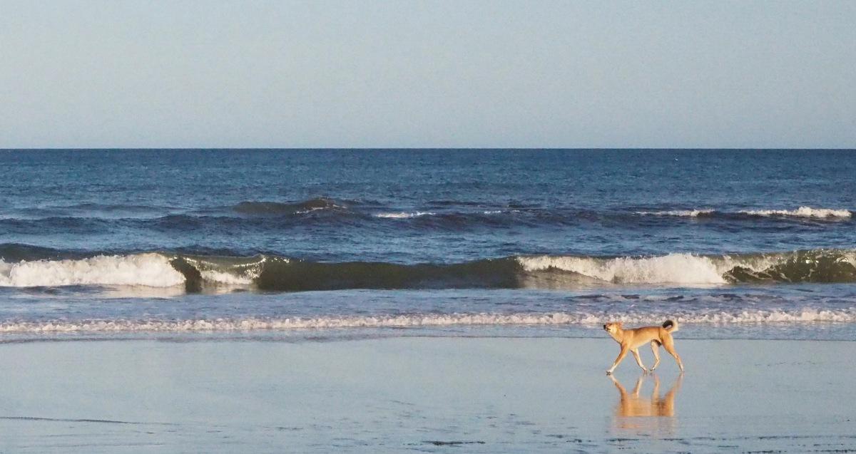 Fraser Island, QLD.